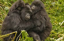 4 Days Gorilla Trek & Wildlife Tour